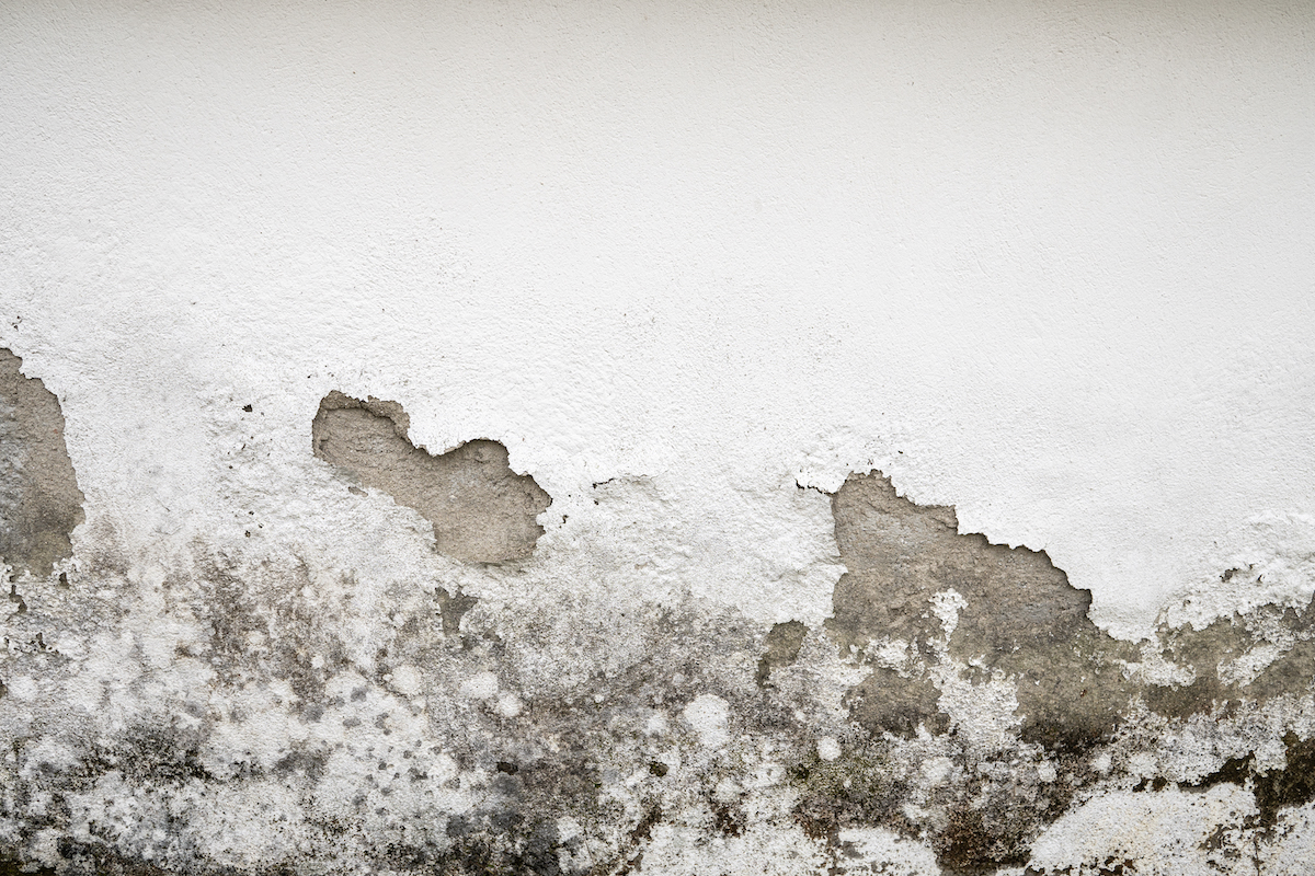 What to Do About Mold in Your Home